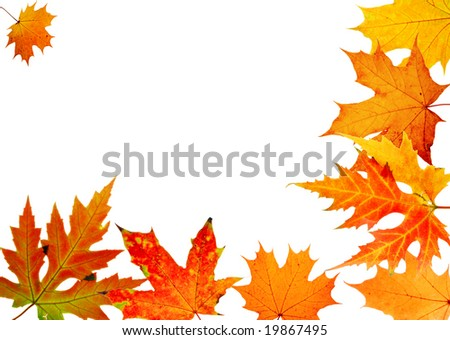 autumn maple-leaf, frame for a postal on a white background - stock photo