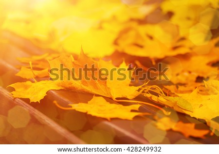 Autumn maple leaf lying on the wooden bench, seasonal fall natural sunny background - stock photo