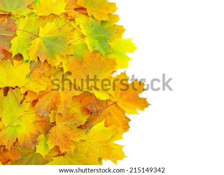 autumn maple leafs  - stock photo