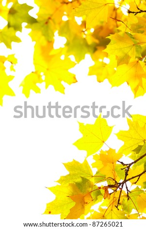 Autumn maple leafs on a white background. The decorative frame of the natural elements - stock photo