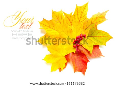 Autumn maple leaves and red berries on white background