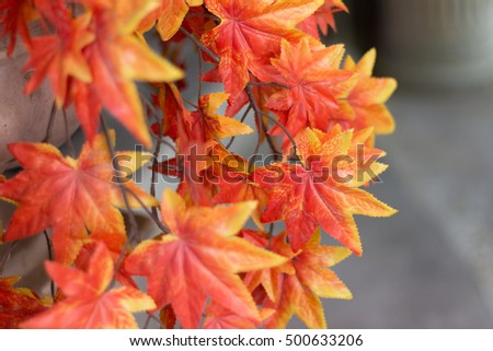 Autumn maple leaves background. red maple leaves for background.(vintage effect and soft focus)