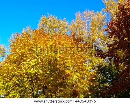 autumn maple leaves blue sky yellow orange - stock photo