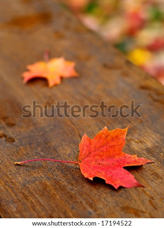 Autumn maple leaves fallen on a picnic table - stock photo