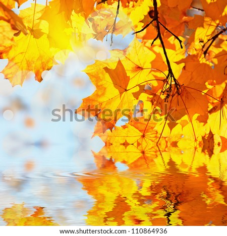 autumn maple leaves in water - stock photo