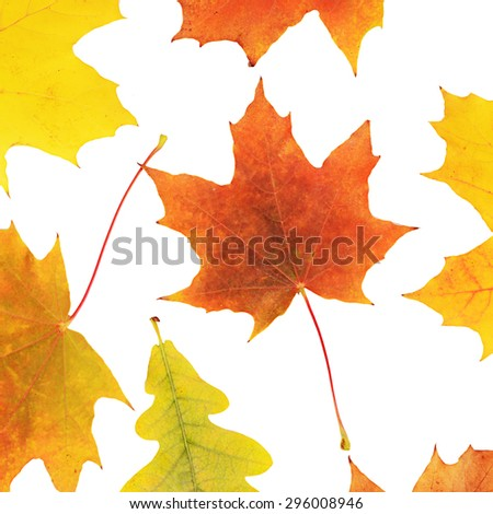 Autumn maple leaves isolated on white background - stock photo