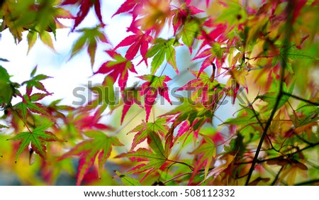 autumn maple tree leaf nature abstract detail background