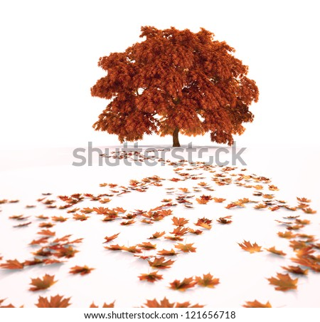 Autumn maple tree with a path of fallen leafs