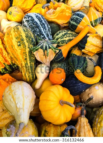 Autumn market, variety of colorful gourds. - stock photo