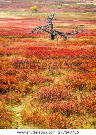 Autumn Meadow at Shenandoah National Park - stock photo
