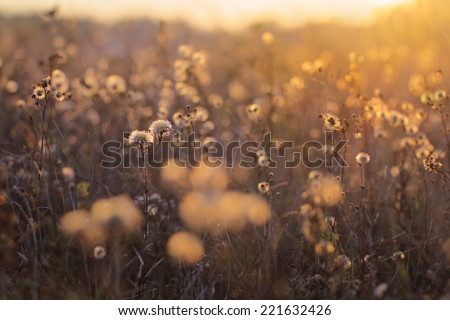 Autumn meadow plants during sunset - stock photo