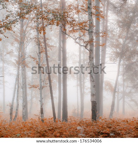 Autumn misty morning in the forest - stock photo