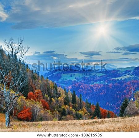 Autumn misty morning mountain with haystack stark bare tree and sunshine (Carpathian Mt's, Ukraine) - stock photo