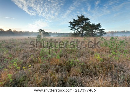 autumn misty sunrise over marsh, Friesland, Netherlands