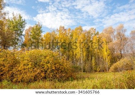 Autumn mixed forest. yellow colored trees. Hardwood forest with orange leaves around trees and on the ground - stock photo