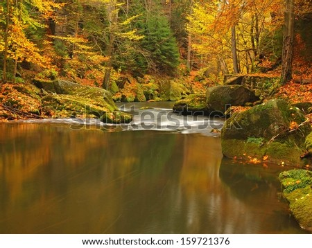 Autumn mountain river with low level of water, fresh green mossy stones and boulders on river bank covered with colorful leaves from maples, beeches or aspens tree, reflections on wet leaves.