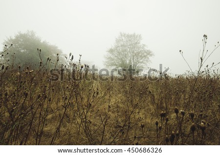 autumn natural landscape with tree - stock photo