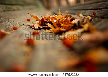 Autumn nature background with red leaves. Instagram vintage retro effect. Blurred picture, selective focus, close up. - stock photo