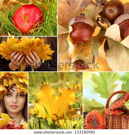 Autumn nature collage - stock photo