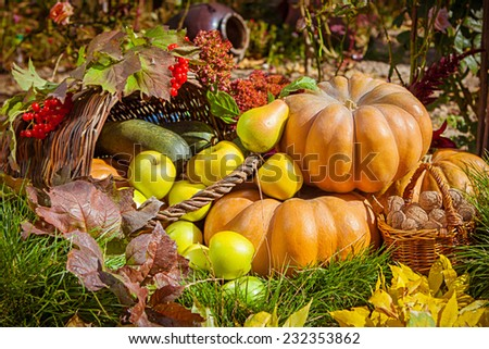 Autumn nature concept. Fall fruit and vegetables outdoors. Thanksgiving dinner - stock photo