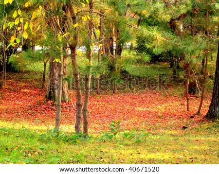 Autumn nature, maple red leaves in the Ninnaji temple gardens in Kyoto, Japan - stock photo