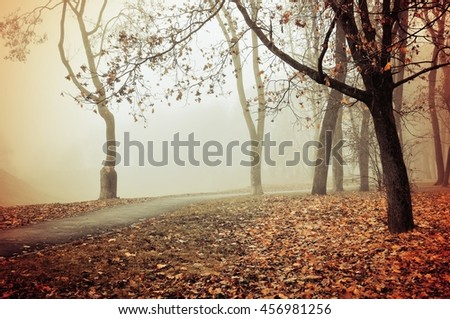 Autumn nature -misty park autumn view. Autumn park alley in dense fog - foggy autumn landscape with bare autumn trees and orange fallen leaves. Autumn alley in dense autumn fog. Soft filter applied. - stock photo