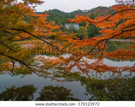 Autumn nature, Ryoanji temple gardens in Kyoto, Japan - stock photo