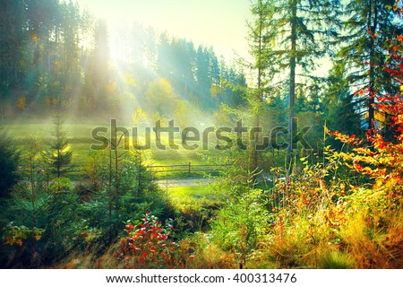 Autumn Nature scene. Beautiful morning Misty Old Forest and meadow with Sun Rays, Shadows and Fog. Forest, Park, Countryside  - stock photo
