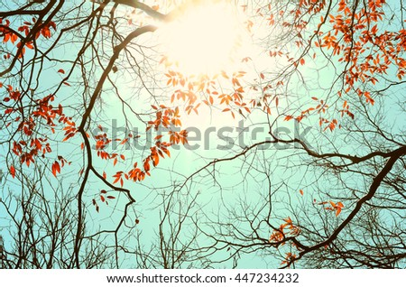 Autumn nature silhouette tree branch on blue sky abstract background. Vintage tone filter.