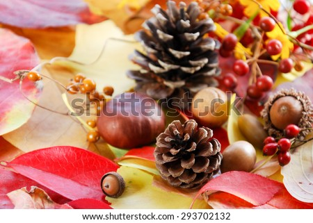 autumn nuts and berries on fallen leaves