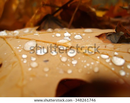 Autumn oak leaf on the ground with drops of dew - stock photo
