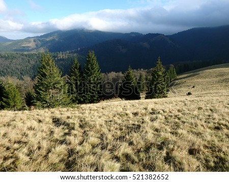 Autumn on alpine meadows, alpine meadow, Velka Fatra, Slovakia,