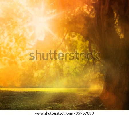 Autumn or summer design background with oak tree in the late colorful afternoon during sunset