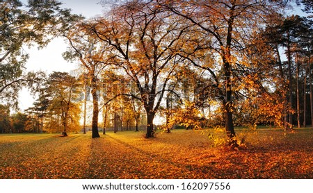 Autumn panorama in park with a sun - stock photo