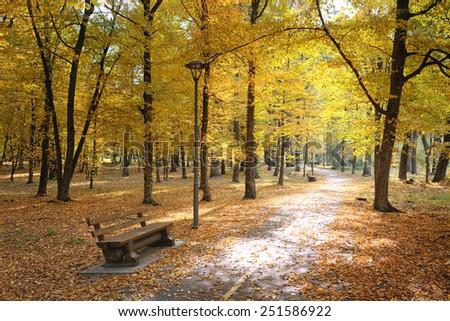 Autumn park and fallen leaves illuminated sun - stock photo