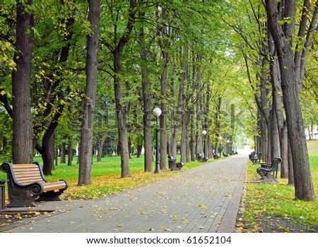 Autumn park, green alley - stock photo
