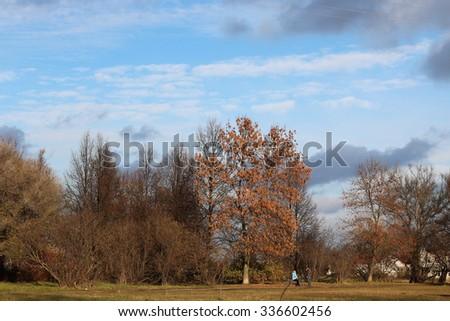 Autumn park trees bare - stock photo