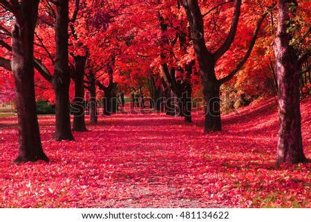 autumn park with color trees as nice natural background