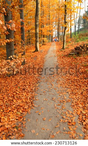 autumn park with orange leaves on ground and park footpath, vertical toned image, selective focus - stock photo