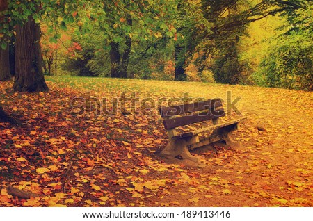 Autumn park with orange trees, dry leaves and single bench, natural seasonal hipster background