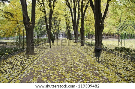 Autumn Park with trees and leaves on the ground, landscape nature