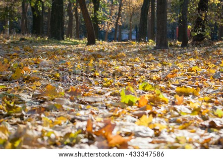 Autumn Park. Yellow leaves lie on the ground. Sunny autumn day in forest Park. Low angle, closeup of leaves - stock photo