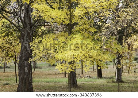 Autumn path in a forest, detail of fallen leaves, cold and nature - stock photo
