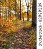 Autumn path in sunrise - stock photo