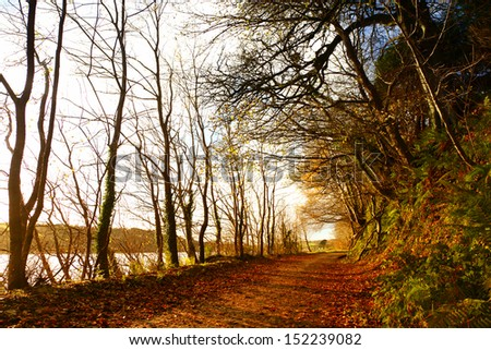 Autumn Pathway. Co.Cork, Ireland. Park Road. Landscape with the autumn forest. Orange leaves in the foreground. - stock photo