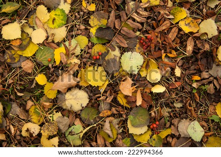 Autumn pattern of the grass with leaves. - stock photo