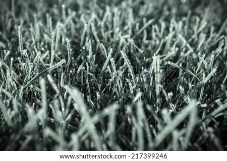 Autumn photo of first freezing day with degree below zero. Frost on a green lawn taken one cold october morning. - stock photo