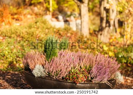 autumn plants - stock photo