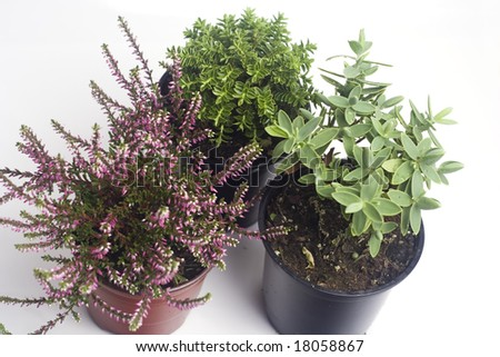 autumn plants in the pots isolated on white - stock photo