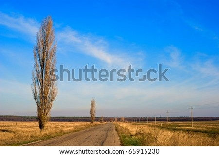 autumn poplars near a road - stock photo
